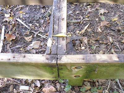 Supporting posts of boardwalk are rotted.