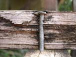 A nail in a deck board rotting