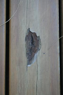 Apparent Dry Rot in First Deck Board